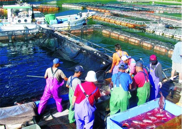 Công ty Xuất khẩu Lao động uy tín IVY HR đang tuyển 2 nam nuôi trồng thủy sản đi Nhật